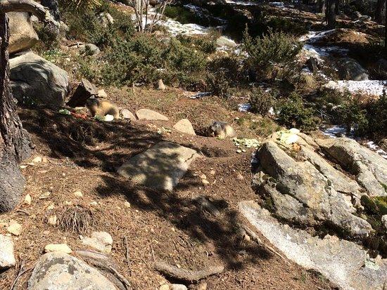 Parc animalier des Angles: Marmota