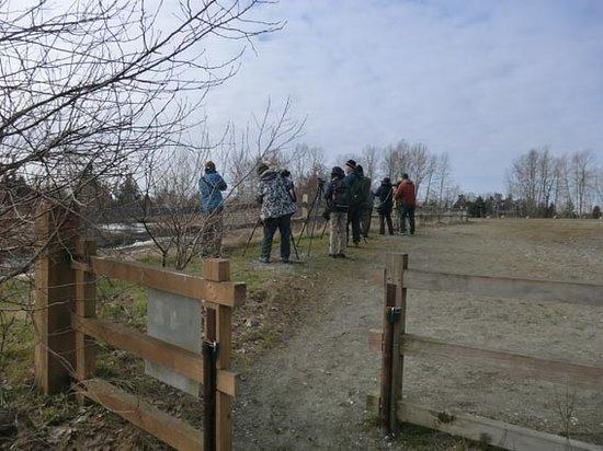 Surrey, Kanada: 湿地にはシギ・チドリがいる