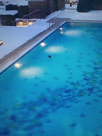 Steigenberger Grandhotel und Spa: Eine Ente auf dem Außenpool.