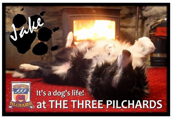 The Three Pilchards: dogs welcome