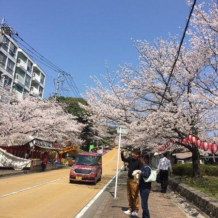春の桜は綺麗