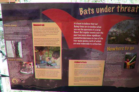 Atherton, Australia: Bats under threat
