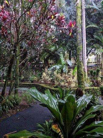 Honomu, هاواي: IMG_20180319_175122_large.jpg
