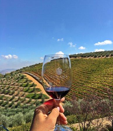 Tokara Wine Estate: photo1.jpg