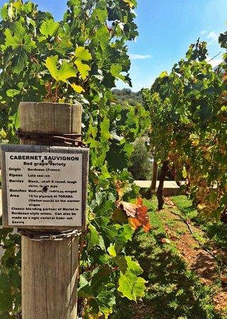 Tokara Wine Estate: photo3.jpg