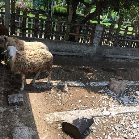 PD Ostrich Show Farm: photo4.jpg