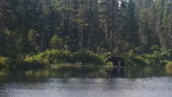 Rockwood Cottages: Moose sighting