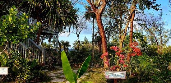 Pineapple Fields Resort : 20180403_191954_large.jpg