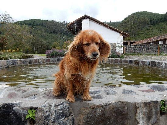 Hacienda Zuleta: Canella