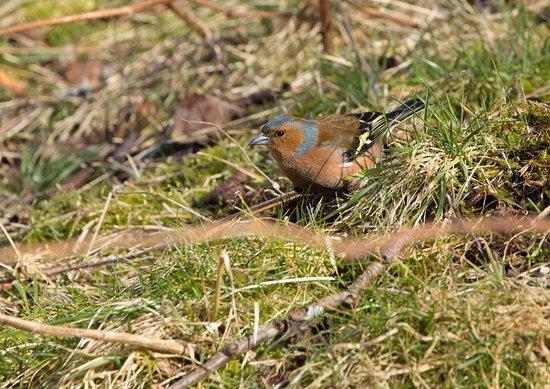 Aviemore, UK: Loch an Eilein birds