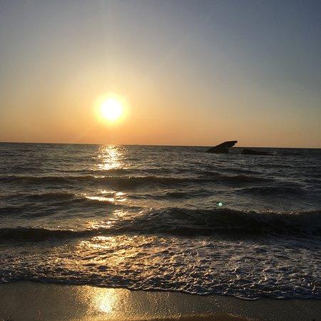 Sunset Beach: SS Atlantus