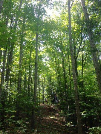 Frenchburg, KY: Red River Appalachian Zipline Tours