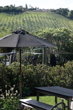 Isola Waiheke, Nuova Zelanda: View from the tasting area