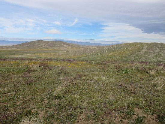 Antelope Valley California Poppy Reserve: Views