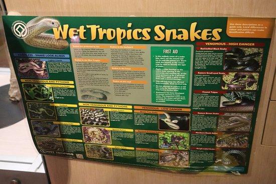 Malanda Falls Visitor Centre: Wet Tropics Snakes