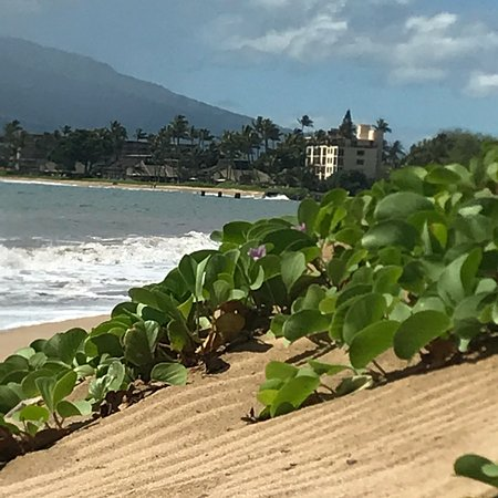 Ocean Breeze Hideaway: photo2.jpg
