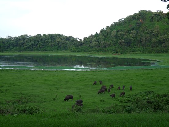 Marsabit National Reserve, Kenia: Buffalo coming right up to the lodge in early evening.