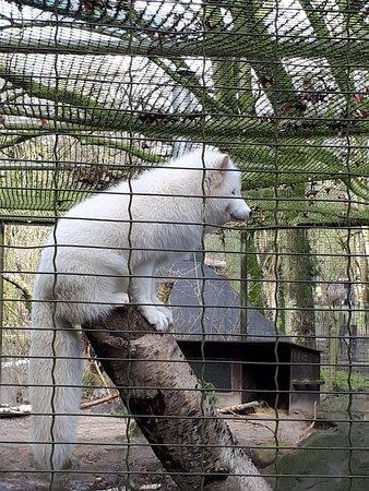 Der Beste Zoo