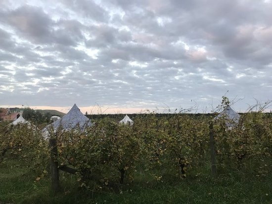 Fernhill, New Zealand: Looking back at the bell tents & vineyard