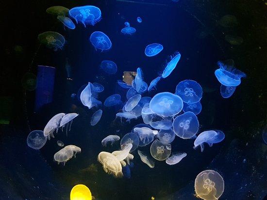 Критский морской аквариум: :-)