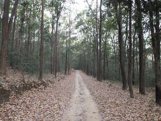 Jim Corbett National Park, Indien: Approach Road