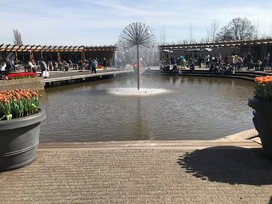 Keukenhof Gardens Half Day Guided Tour from Amsterdam with Free 1-Hour Cruise: mof786 on instagram