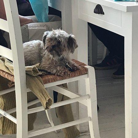 Abbekas, Sweden: Även hunden trivs här