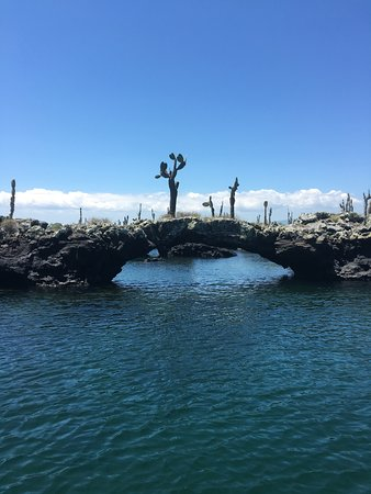 Guiding Galapagos Expeditions: Lava tunnels - we snorkeled and saw a sea horse, sea turtles. Amazing!