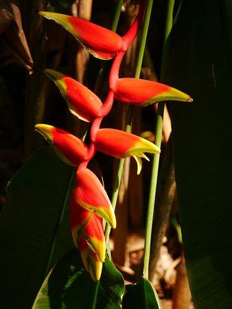 Hiriwadunna, Sri Lanka: Fascinating tour but cheaper to buy the plants yourself!