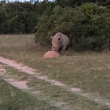Schotia Safaris Private Game Reserve: photo1.jpg