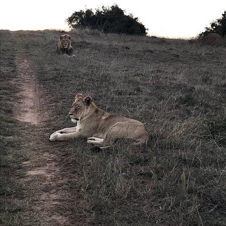 Schotia Safaris Private Game Reserve: photo2.jpg