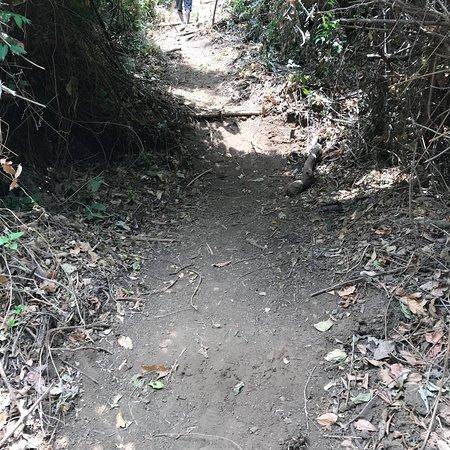 جريسيا, كوستاريكا: photo5.jpg