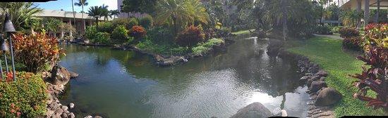 Marriott's Kaua'i Beach Club: koi pond on garden area