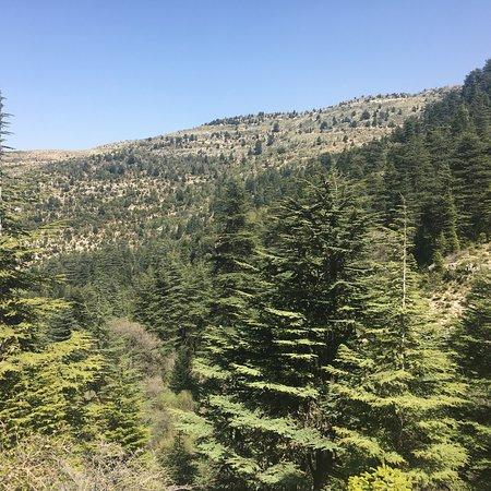 Horsh Ehden Nature Reserve: photo0.jpg