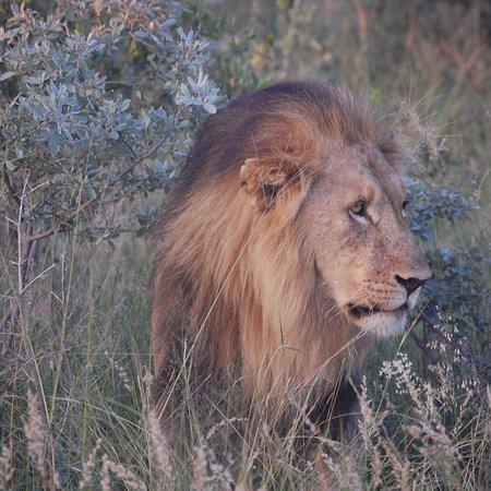 Etali Safari Lodge: photo3.jpg