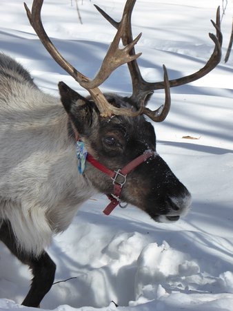 how to get to running reindeer ranch i