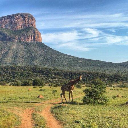 Entabeni Game Reserve, South Africa: photo0.jpg