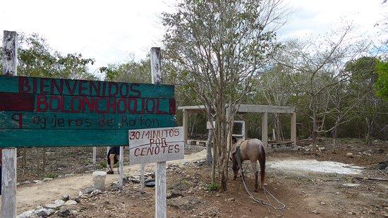 Cuzama, Μεξικό: suggested 30 min limit
