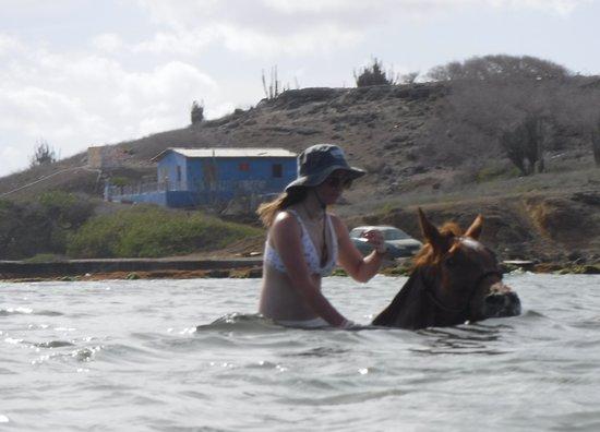 Rancho Washikemba horse ranch Bonaire: Swimming on horseback