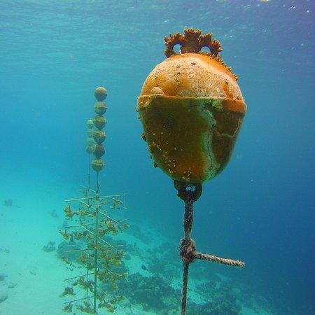 Buddy Dive Resort: photo4.jpg