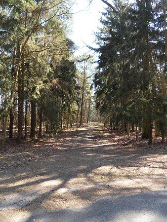 Grodziec, Πολωνία: Spacer lasem