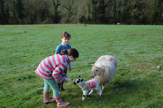 Bratton Clovelly, UK: Feeding the lambs in the gorgeous surroundings