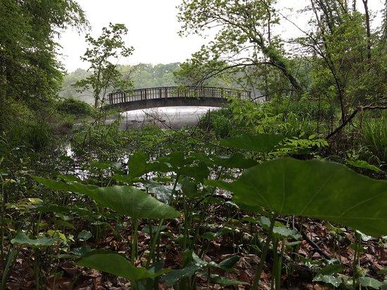 Crystal Springs, MS : Park not too far from the inn