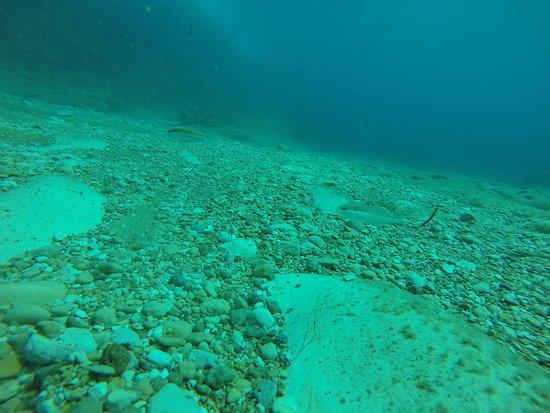 Мунксар, Мальта: Diving