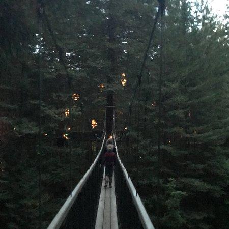 Redwoods, Whakarewarewa Forest: photo9.jpg