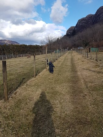 Craig Highland Farm: 20180401_165432_large.jpg