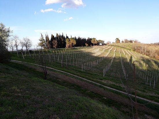 Campanacci Agriturismo: terreno intorno al fabbricato