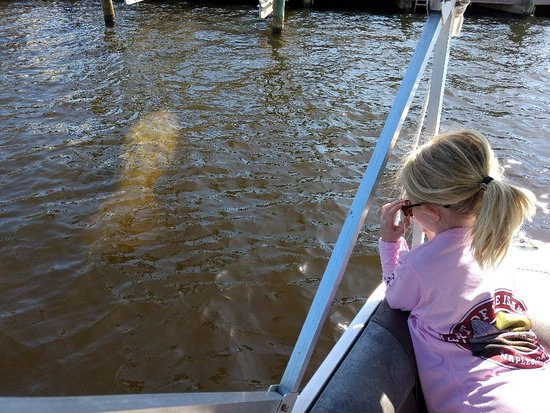 Manatee Sightseeing Eco-Tour by Boat in Naples Photo