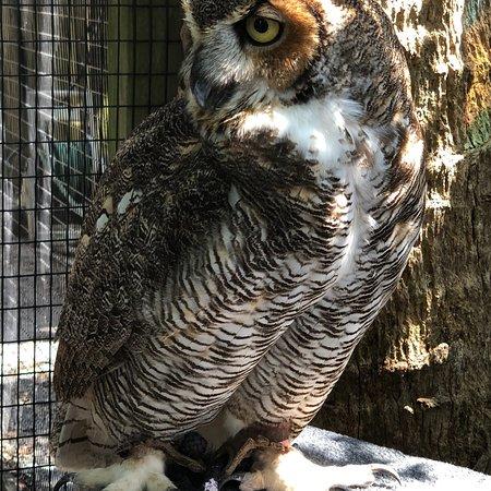 Peace River Wildlife Center: photo2.jpg