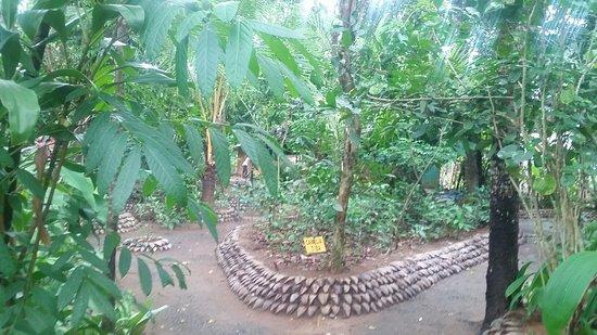Hiriwadunna, Sri Lanka: 20180310_153642_large.jpg